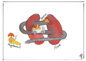 Das in der Niere freigesetzte Renin bewirkt das Hormon Angiotensin 1. Illustration: Elisabeth Greger