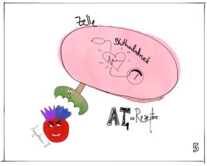 Das Angiotensin 2 ist in der Lage, über den AT1-Rezeptor den Bluthochdruck zu erhöhen. Illustration: Elisabeth Greger