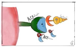 Die ACE-Hemmer verstopfen den ACE-Rezeptor und schützen vor Angiotensin. Illustration: Elisabeth Greger